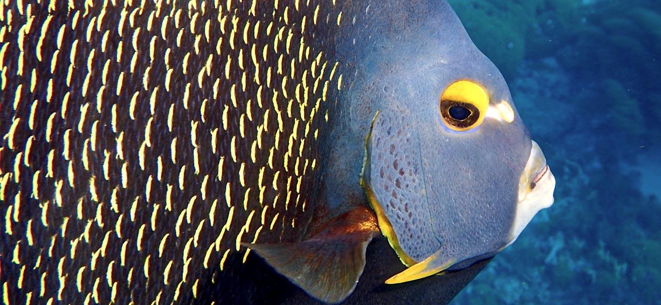 Underwater snorkeling photo tips