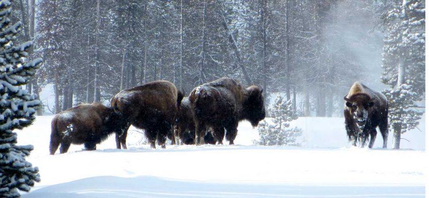 Best winter gear Yellowstone National Park
