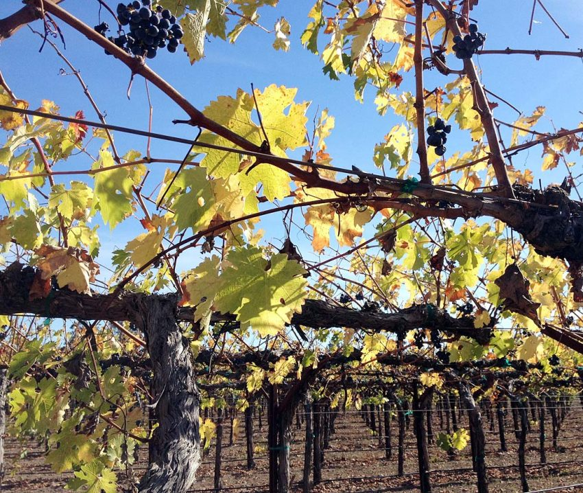 Bicycle touring California wine country