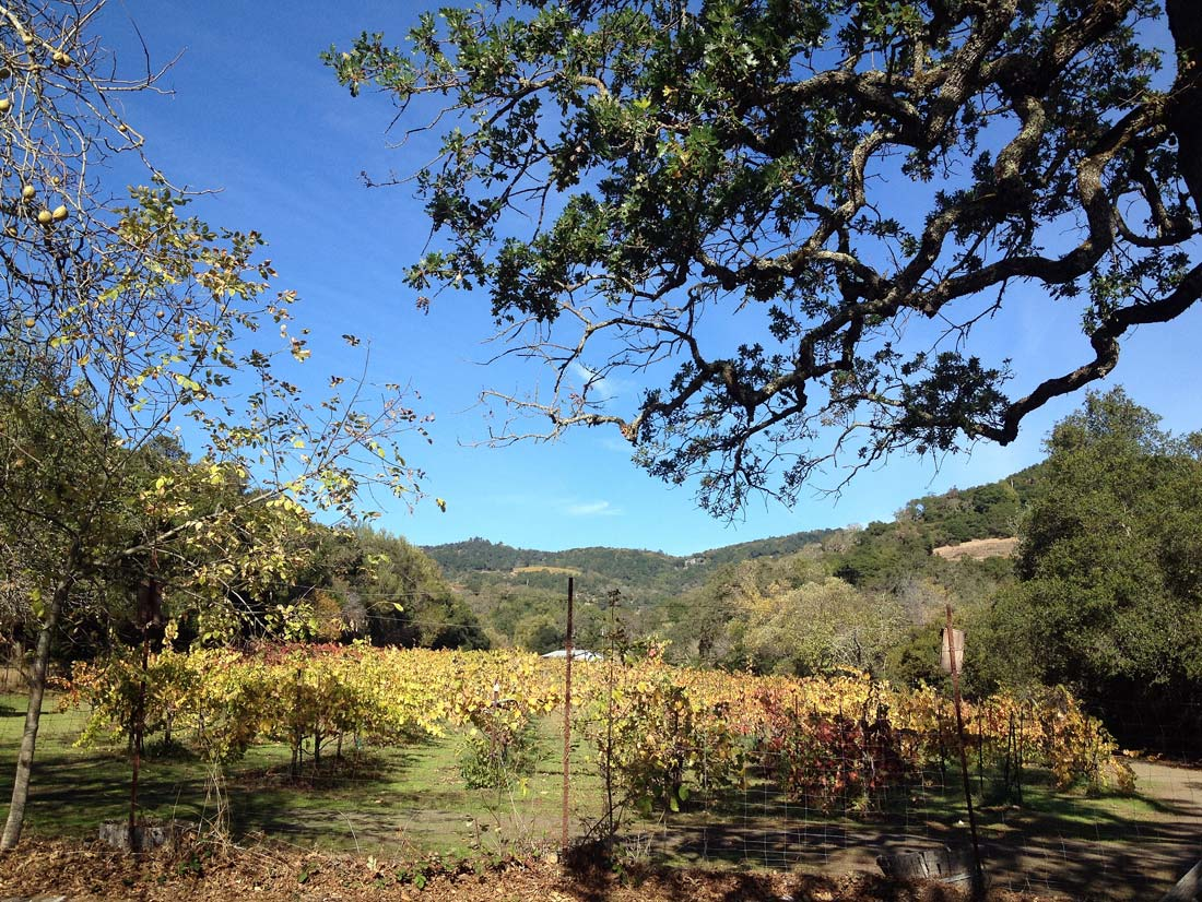 Sonoma less expensive less crowded than Napa