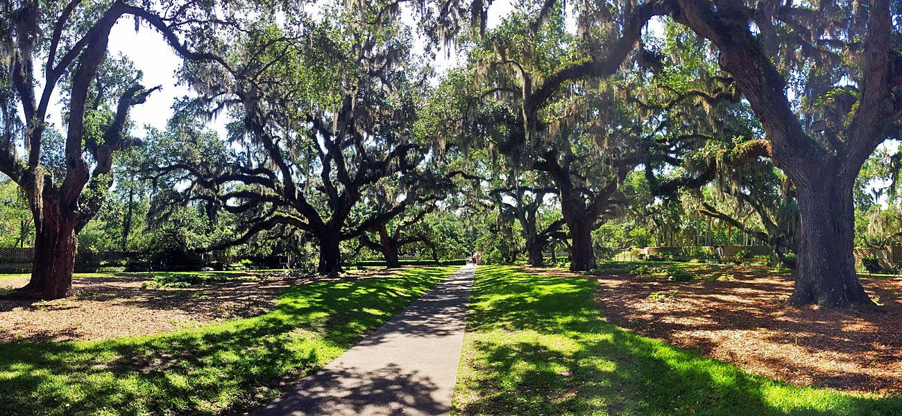 Live Oak Trees draped with Spanish Moss at Brookgreen Gardens