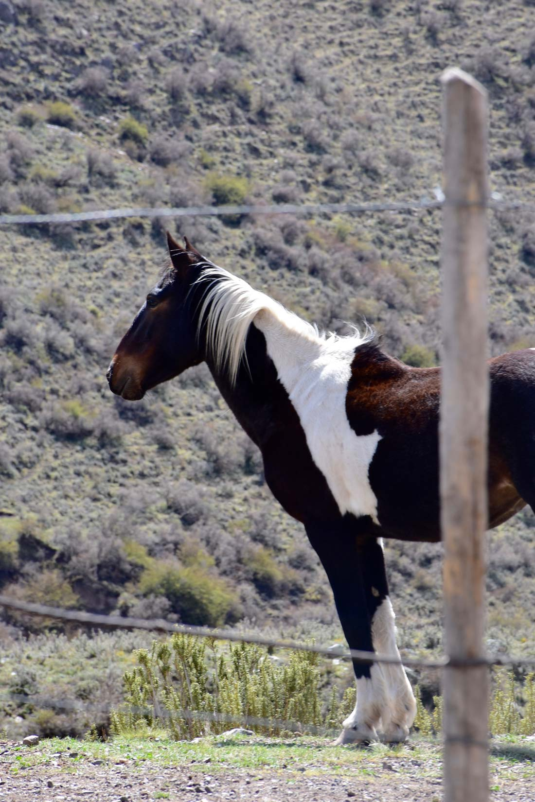 Horse gaucho day Argentina