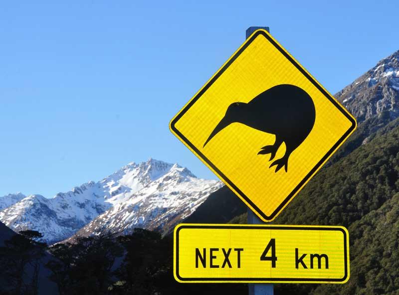 Kiwi state bird New Zealand