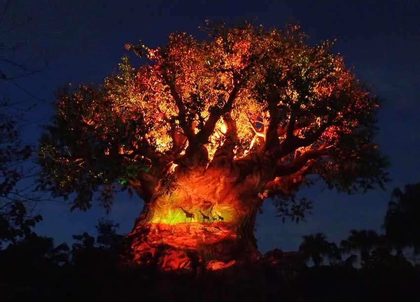 Disney Animal Kingdom Tree Life