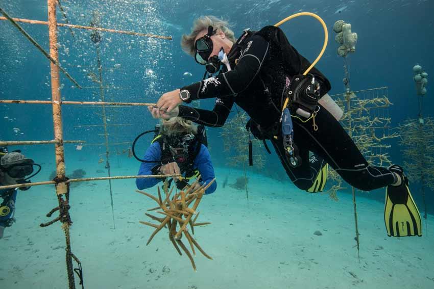dive shop staff growing coral strengthen reefs.