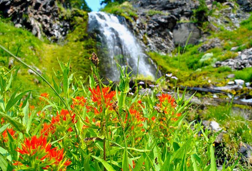 Crater Lake Plaikni Falls wildflowers