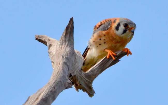 bird watching key west florida keys