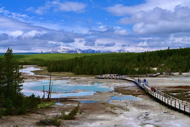 The spring crowds are smaller in the Norris Geyser Basin.